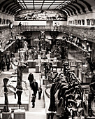 Elevated interior view of the Museum of Natural History (Musee d'Histoire Naturelle) in Paris, France. Sepia toned.