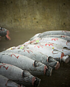 A row of frozen tunas in the Tsukiji Fish Market. Tsukiji Market is best known as one of the world's largest fish markets, handling over 2,000 tons of marine products per day.