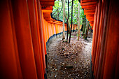 Rows of brightly colored Tori Gates at the Fushimi Inari Shrine, near Kyoto, Japan. The  Fushimi Inari Shrine is a shrine dedicated to Inari, the Shinto Rice God. There are thousands of shrines dedicated to Inari throughout Japan, but the Fushimi Inari is