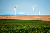 Wind turbines against clear sky with green wheat field in foreground, Oregon, USA