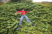 Hiker laying down and taking break in sub-alpine fir tree, Merritt, British Columbia, Canada