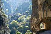 Scenery of mountains and forest at Cares Trail, Picos de Europa, Asturias, Spain
