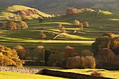 Sunlit fields, hillside and autumn colour close to Grassington, Wharfedale, Yorkshire Dales National Park, North Yorkshire, Yorkshire, England, United Kingdom, Europe