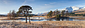 Winter scenery of Scots pines and frosted grasses at Loch Tulla, Bridge of Orchy, Highlands, Scotland, United Kingdom, Europe