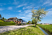 Horse carriage, Vitte, Hiddensee island, Mecklenburg-Western Pomerania, Germany