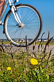 Cyclist, Vitte, Hiddensee island, Mecklenburg-Western Pomerania, Germany