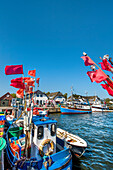 Fishing boats, harbour, Vitte, Hiddensee island, Mecklenburg-Western Pomerania, Germany