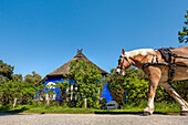Horse in front of Blaue Scheune, Vitte, Hiddensee island, Mecklenburg-Western Pomerania, Germany