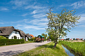 Horse carriage, Vitte, Hiddensee island, Mecklenburg-Western Pomerania, Germany
