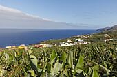 near San Andres, village, east coast, Atlantik, UNESCO Biosphere Reserve, La Palma, Canary Islands, Spain, Europe