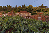 cottage, vineyard, near Puntagorda, UNESCO Biosphere Reserve, La Palma, Canary Islands, Spain, Europe