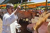 blessing of animals, procession in honour des Patrons San Antonio, livestock fair in San Antonio del Monte, Garafia region, UNESCO Biosphere Reserve, La Palma, Canary Islands, Spain, Europe