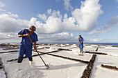 skimming off sea salt, Flor de Sal, Salinas Marinas de Fuencaliente, saline, saltworks, Fuencaliente, UNESCO Biosphere Reserve, La Palma, Canary Islands, Spain, Europe