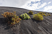 Volcan de San Antonio seen from Volcan de Teneguia, UNESCO Biosphere Reserve, La Palma, Canary Islands, Spain, Europe
