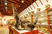 Museo Insular, island museum, Convento de San Francisco de Asis, former Franziscan monestary , Santa Cruz de La Palma, capital of the island, UNESCO Biosphere Reserve, La Palma, Canary Islands, Spain, Europe