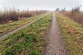 Feldweg, Weide, Nebel, Schilf, Dykhausen, Sande, Landkreis Friesland, Niedersachsen, Deutschland, Europa