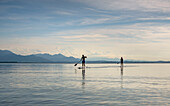 A young man and a young woman stand-up-paddling on the Chiemsee, in the background the Chiemgau Alps, Chieming, Upper Bavaria, Germany