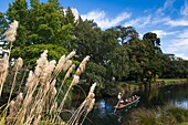 New Zealand, South Island, Christchurch, punting on the Avon River.