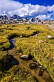 Creek and meadow in Dusy Basin, Kings Canyon National Park, California USA.