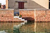 Venetian cat observes the Giudecca canal, Venice, Veneto, Italy