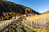 Autumn colors along the footpath to Melago, Vallelunga, Venosta Valley, province of Bolzano, South Tyrol, Italy