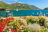 Flowers frame a corner of lake Como where you can take relax, Menaggio, Como province, Lombardy, Italy, Europe