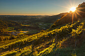 Sunset on the vineyards that produce Merlot wine, Pedrinate, Mendrisio district, Canton of Ticino, Switzerland, Europe
