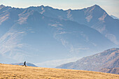 Runner on the slopes of Scermendone with Orobie Alps on background, Valtellina, province of Sondrio, Lombardy, Italy