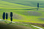 Green hills in Orcia valley Europe, Italy, Tuscany, Siena district, Pienza municipality