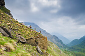 An herd of ibexes, Valle dell'Orco, Gran Paradiso National Park, Piedmont, Graian alps, Province of Turin, Italian alps, Italy