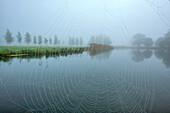 Schlehdorf, Kochel Lake, Bad Tölz-Wolfratshausen district, Upper Bavaria, Germany, Europe. Cobweb with morning dew at boathouse jetty at Kochelsee