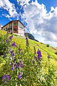 Summer bloom at Rifugio Bietti Buzzi, Bocchetta di Prada, Grigna Settentrionale(Grignone), Northern Grigna Regional Park, Lombardy, Italy, Europe.