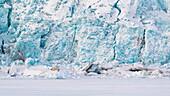Polar bear in Tempelfjorden (ursus maritimus), Svalbard, Norway