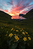 Wild flowers on hills around Tjornuvik at sunrise, Sunda Municipality, Streymoy Island, Faroe Islands
