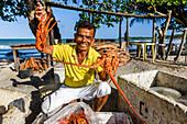 Smiling local restaurant owner showing fresh lobsters, Boipeba Island, south Bahia, Brazil
