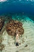 Woman floating, freediving underwater off coast of Roatan Islands reef, Honduras