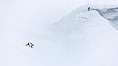 Aerial view of lone Arctic fox (Alopex lagopus) walking on snowy terrain, Kongsfjorden, Spitsbergen, Svalbard and Jan Mayen, Norway