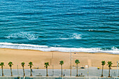 Aerial view of sea and beach with palm trees, Barcelona, Catalonia, Spain