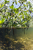 Mangroves, Cancun, Yucatan, Mexico