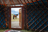 horse seen through the door of a traditional mongolian yurt, bayan-olgii province, mongolia