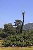 Sri Lanka, Kandy, Peradeniya Botanical Gardens