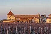 South West France, (PDO) Graves de Pessac-Leognan vineyard. Mandatory credit:  Smith-Haut-Lafitte castle