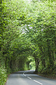 England, Devon, Tree Lined Country Road
