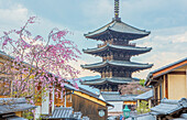Japan, Kyoto City, Pagoda and blossoms