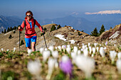 Woman hiking through meadow with crocus in blossom, Monte Caret, lake Garda, Garda Mountains, Trentino, Italy
