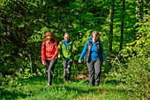 Three persons hiking through forest, Feldberg, Albsteig, Black Forest, Baden-Wuerttemberg, Germany