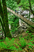 Two persons hiking standing on bridge and looking into stream Alb, Studinger Steg, Albsteig, Black Forest, Baden-Wuerttemberg, Germany