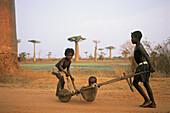 Madagascar, CÙte Ouest, Morondava, allÈe des baobabs, trois enfants jouant avec