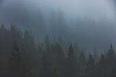 Climber in the misty forest, E5, Alpenüberquerung, 4th stage, Skihütte Zams,Pitztal,Lacheralm, Wenns, Gletscherstube, Zams to  Braunschweiger Hütte, tyrol, austria, Alps