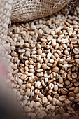 unroasted coffee beans for export, Hacienda Venecia around Manizales, UNESCO World Heritage Coffee Triangle, Departmento Caldas, Colombia, Southamerica